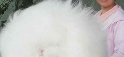 超可愛大兔子