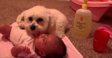 當有吸塵器接近這個小女娃的時候,這隻狗狗做的事情讓我好敬佩。