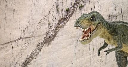 山壁上竟然有上千個驚人的恐龍足跡,難道數千萬年前的恐龍會飛簷走壁嗎?
