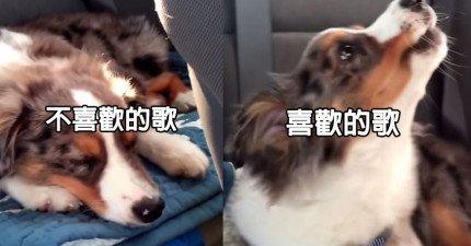 這隻狗狗聽到喜歡的歌和不喜歡的歌時的反應,差別也太大了吧!