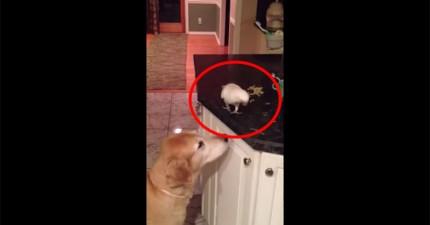 這就是為什麼你不該讓狗跟鳥成為最要好的朋友。