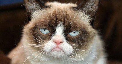 這隻全世界最不爽的貓已經靠這張臭臉幫她主人賺進30億台幣!