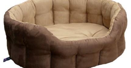 你可能很愛你的床,但這隻鬥牛犬寶寶剛收到新床的反應會把你給完全比下去!
