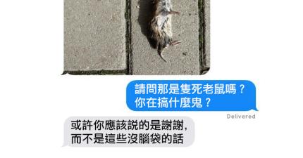 如果是貓咪會和人類傳簡訊的話,應該會讓人打字時氣到爆青筋吧...