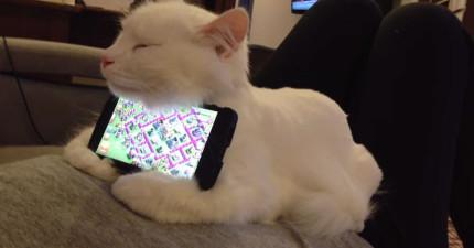 他把手機放在貓咪的身上,結果最完美的事情發生了。