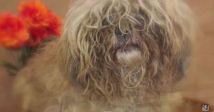 殘酷的主人把這隻即將生產的狗媽媽遺棄在收容所前,但之後看到的畫面讓我感動到眼眶都紅了...