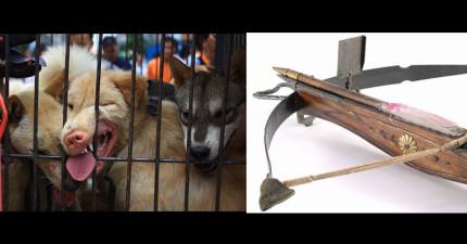 中國這名偷偷賣狗肉的集團老大想展示如何用十字弓殺狗,結果大腿一陣刺痛之後...集團就整個瓦解了。