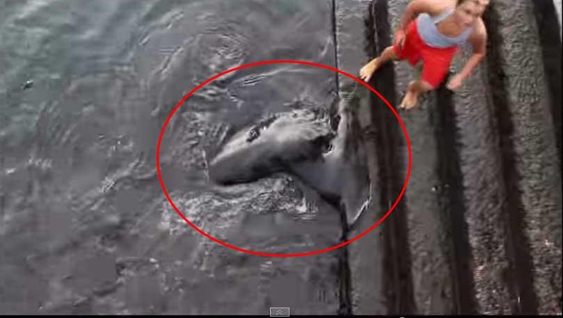這個小男生在海裡交到了新的朋友,當我看到是誰時,我完全嚇壞了!