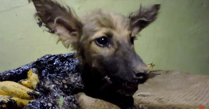 這隻小狗狗被瀝青沾滿動彈不得,但他被拯救後的「超開心反應」就是你今天最需要的快樂!