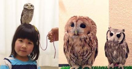 來到東京這間貓頭鷹咖啡廳,你就能體會哈利波特跟超萌貓頭鷹相處的幸福感了!