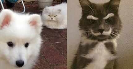 13隻再過不久就會因為「謀殺主人」而登上社會頭版的憤怒貓咪。