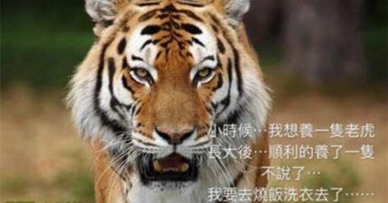 人夫PO網抱怨養了一隻「母老虎」 慘被老婆抓包GG了