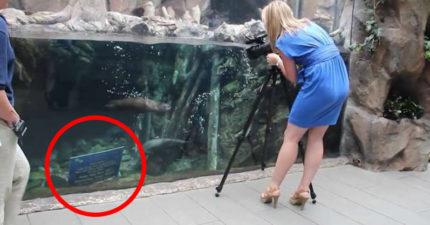 正妹記者拍海獺看到「水中告示牌」轉頭被下跪突擊!