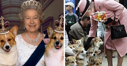 童年伴侶柯基Willow安樂死 英女王:象徵世代結束
