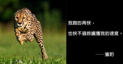 古人語錄不夠看!「動物撩妹神句」讓你1秒變愛情俘虜 無尾熊HEN會♡