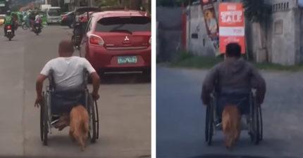 影/車禍後再也無法行走 愛犬跟後頭「幫推輪椅」:主人別怕,我在後面撐著你~
