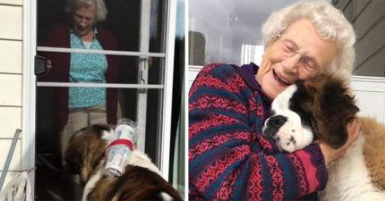 影/汪汪半路認親 每天「敲隔壁獨居奶奶的門」:阿嬤~我來玩惹!