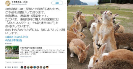 日本豪雨「兔兔島」面臨饑荒危機 發文討救兵:都免費~快來餵兔兔啦!