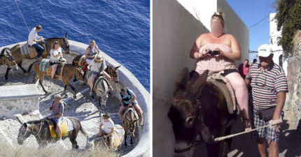 影/天天負荷超重!希臘驢子全年無休載遊客 載到皮膚都磨破了...