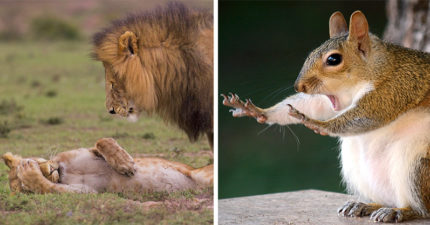 工讀生快給我出來!30張「2018最搞笑野生動物攝影獎」爆笑得獎照