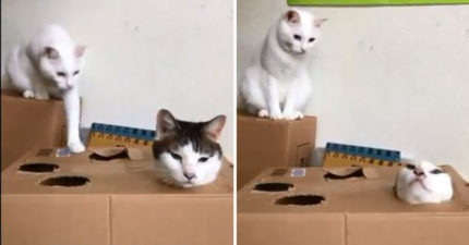 佛系喵頭卡紙箱「思考貓生」 一臉靈魂出竅:我是誰?我在哪?