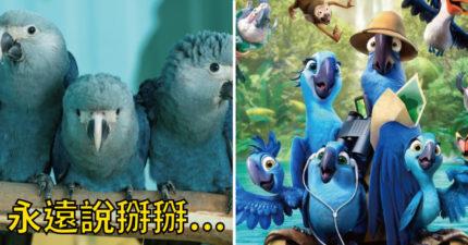 家被人類砍光光!《里約大冒險》主角美麗藍鸚鵡絕種 未來只剩標本可以看...