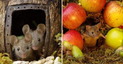 影/花園發現老鼠一家...攝影師沒趕走反而幫蓋「宮崎駿風格夢幻莊園」 「吃大餐的桌子」超可愛!
