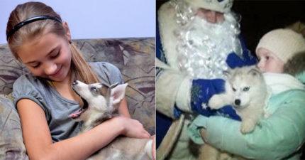 誰說普丁很鐵漢!小女孩許願「想要一隻狗狗」 聖誕節門鈴響...收到來自俄羅斯最驚奇包裹❤