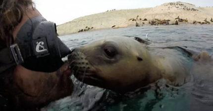 潛水員剛浮出水面就「對上灼熱視線」 小海獅直接一口啾下去太有愛❤