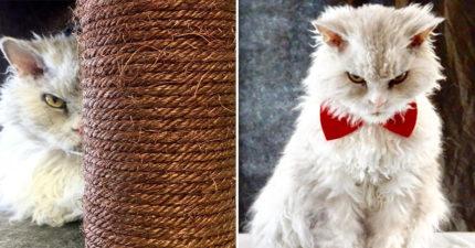 網紅每天「擺臭臉」卻從來沒有負評 超不屑的「厭惡眼神」太迷人...貓咪不壞奴才不愛❤️️