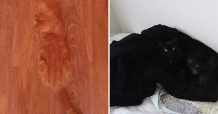 9隻「爸媽跟變色龍有一腿」的有保護色毛孩 最後一隻至少要找5分鐘!