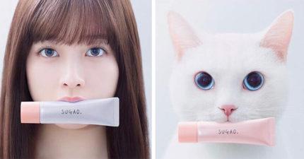 橋本環奈跟白貓幫彩妝代言讓網友崩潰了...到底要「選正妹還是選美貓」?