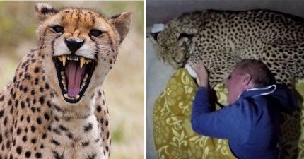 動物學家沒帶裝備直接入住野地 半夜醒來「多了個枕頭」