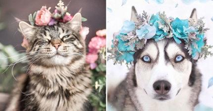 30張「戴上新娘花冠」的毛孩奇蹟美照 傻哈美到像名模!