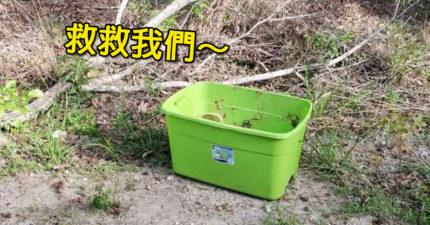 他在中午高溫野外發現「神秘綠箱子」 走進發現「最心碎真相」網崩潰:人類太邪惡!