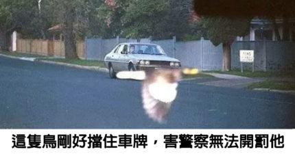 18張讓你懷疑「上帝是否別有用意」的巧合照片 貓皇靠「一個動作」證明超能力!