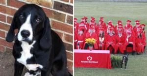 淡定狗「亂入畢業典禮」主人超緊張...下秒「抬起右腿」網友爆笑:原來主角是牠!