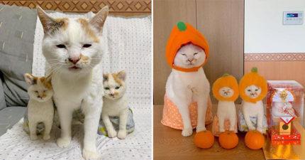 超萌「3貓全家福」在網路爆紅 奴才放大照片驚呆:「只有1隻是貓咪」!