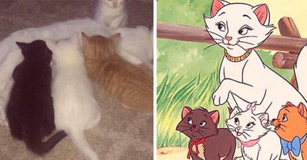 《貓兒歷險記》真的存在!白貓媽媽生下白、橘、黑小貓 「長大後模樣」根本是真人版了