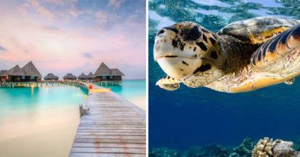 馬爾地夫徵「海龜保姆」 超豪華報酬「機酒全包辦」引暴動:零經驗也可!