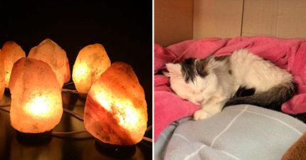 獸醫發現「家裡擺鹽燈」對貓咪有害 這個「習慣性動作」可能會讓你從此失去牠!