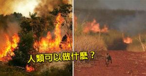 亞馬遜大火延燒3星期!「幕後黑手」竟是巴西政府 人類只剩「5個方法」拯救地球