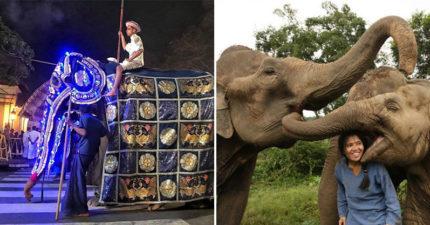 印度慶典讓大象上街遊行 結果「掀開花布畫面」讓網友直接嚇壞:這樣才算聖潔?