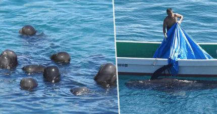 影/超萌海豚「圍在一起」互相磨蹭 網曝光「背後殘忍真相」心碎:日本人犯了大錯!