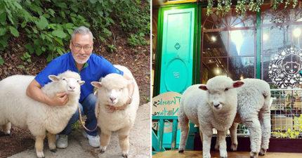 超萌老爺爺牧場系「小綿羊咖啡廳」開張!超不怕生「主動討摸」網尖叫:還有牧羊犬❤