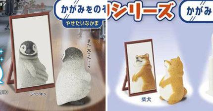 超想捏一把!日推「照鏡子的胖胖動物」系列扭蛋 柴犬頂著「圓滾滾白肚」萌翻全網❤