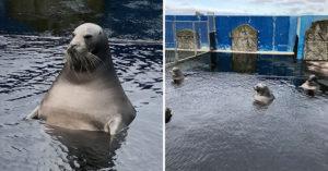 遊客拍下「大叔系海豹泡澡」被瘋傳 網嚇呆直呼:以為來到澡堂!