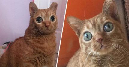 呆萌貓因「卡通般大眼睛」爆紅 超不科學的「眼球直徑」貓奴大愛…馬上追IG!