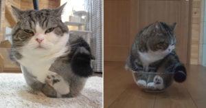 影/貓咪是水做的?小胖貓超愛「勉強自己」塞碗裡 肉球都擠到變形!