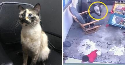 影/寶寶一人在家…爬向樓梯「差一步」就要慘摔下樓 貓皇暴衝「用肉球」英雄救美!